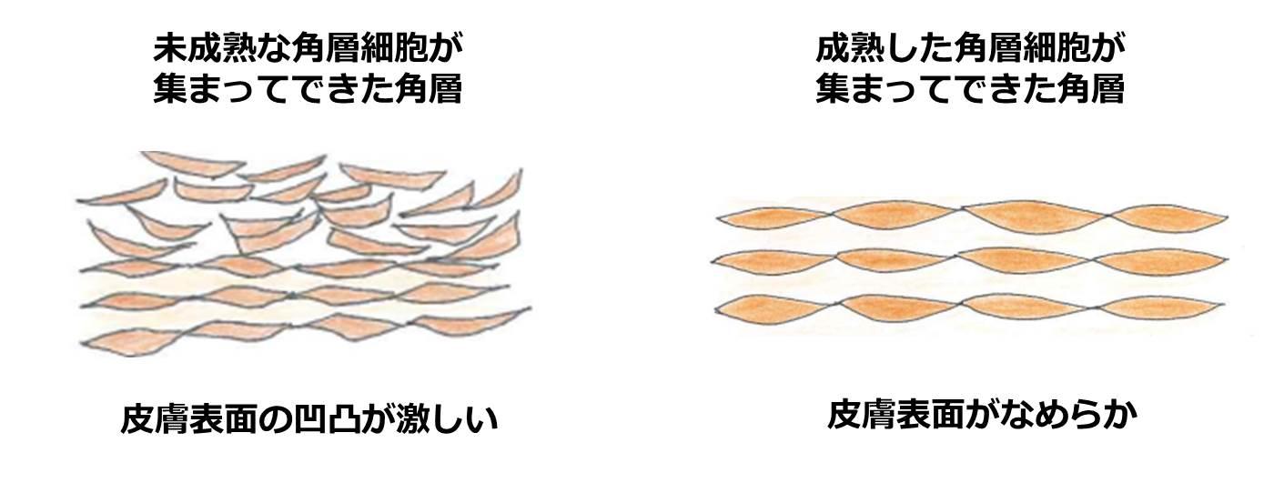オーバー と は ターン 肌のターンオーバーとは?乱れる原因や改善ケアについて